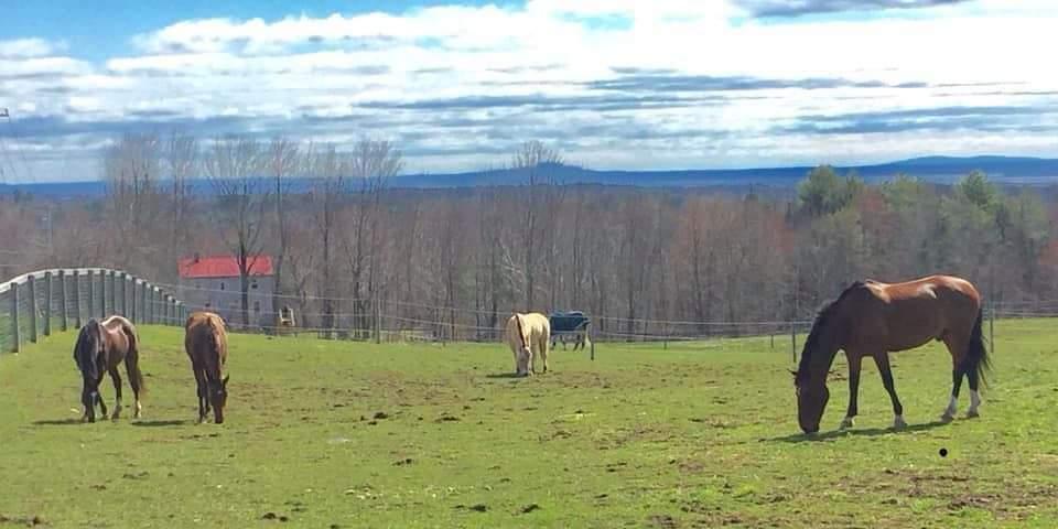 Seahorse stables Spring Meadows