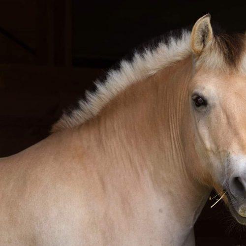 Lesson-Horse-Bernie