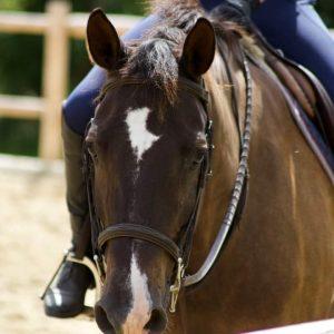 Seahorse-Stables-Belfast-Maine-Horse-rider-2021